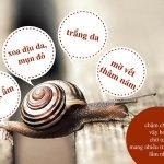 Dịch nhầy ốc sên có công dụng gì?